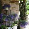 Fleurs, parc et détente dans cette location de chambre avec piscine en Vendée