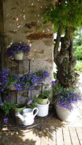 Fleurs et charme pour cette location en maison de charme près du Puy du Fou en Vendée