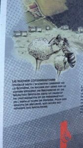 Protection de l'abeille noire de Vendée